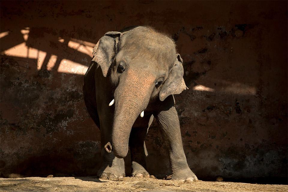 Elefante más solitario liberado