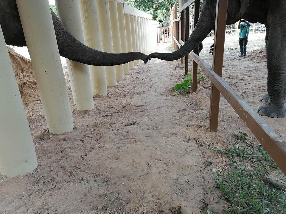 Elefante más solitario saludando