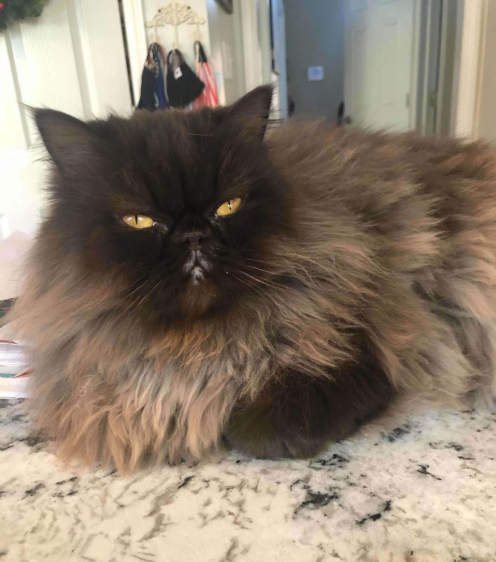 Encantadora gata esponjosa