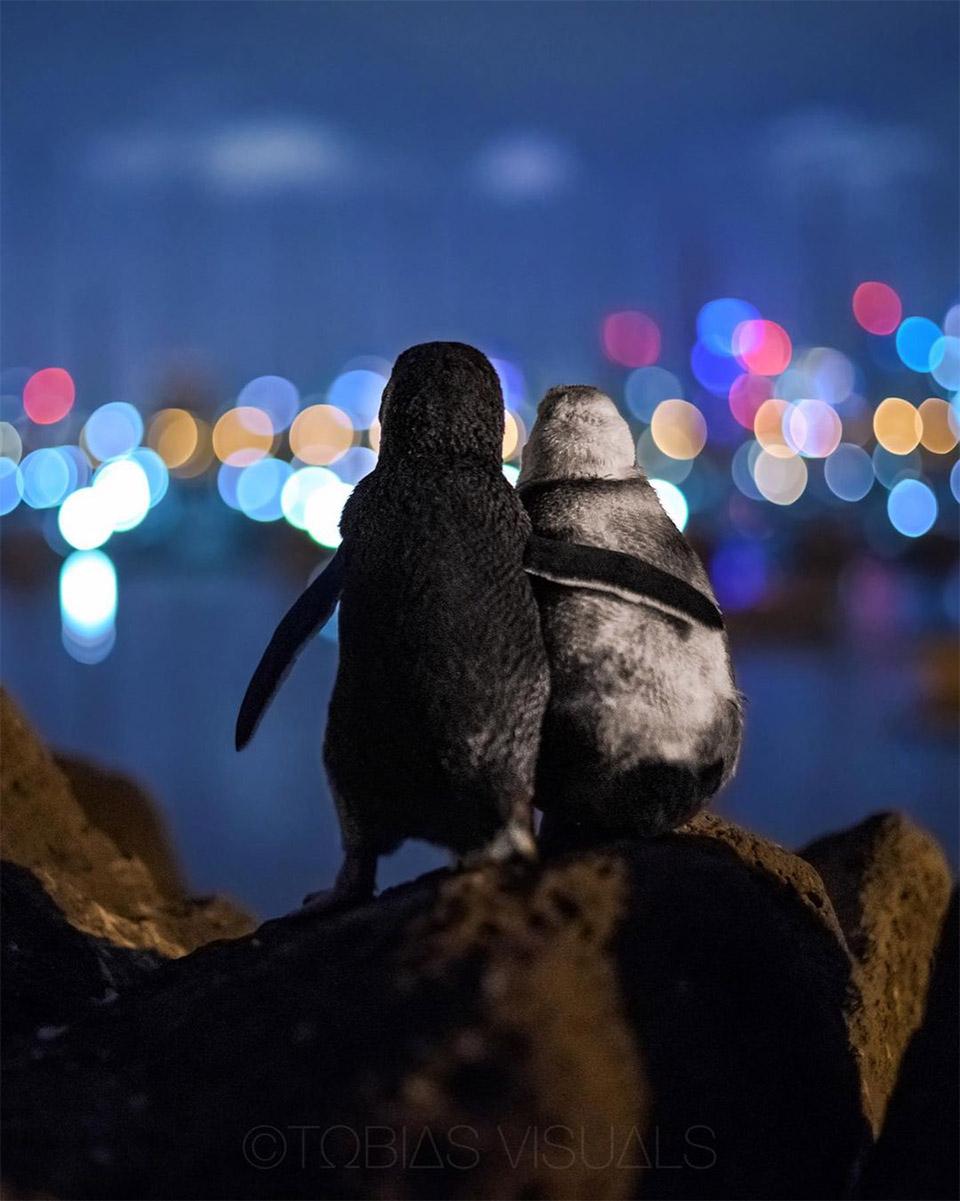 Foto de pingüinos gana premio