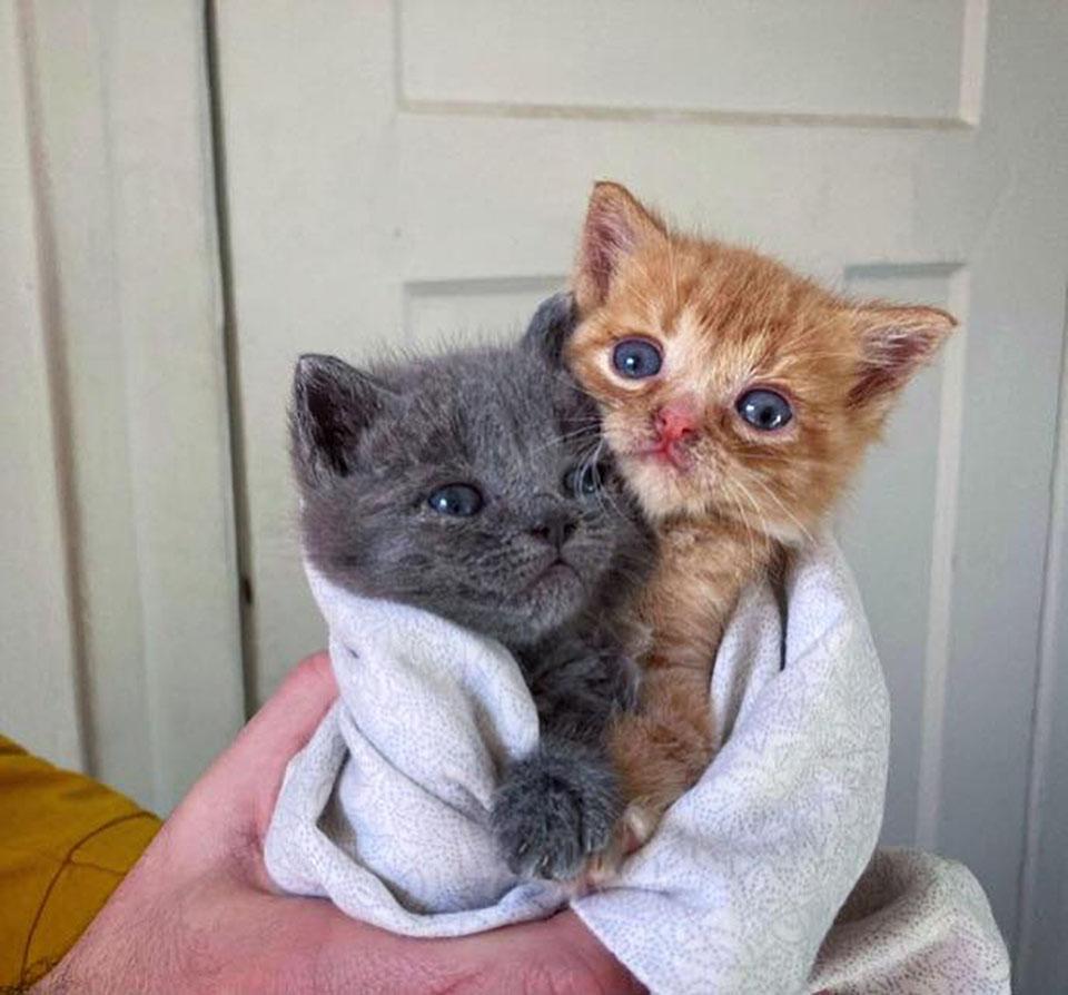 Gata dejó gatitos en puerta