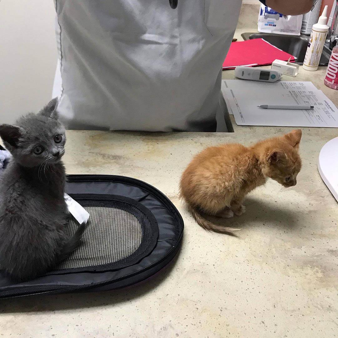 Gata dejó gatitos solos