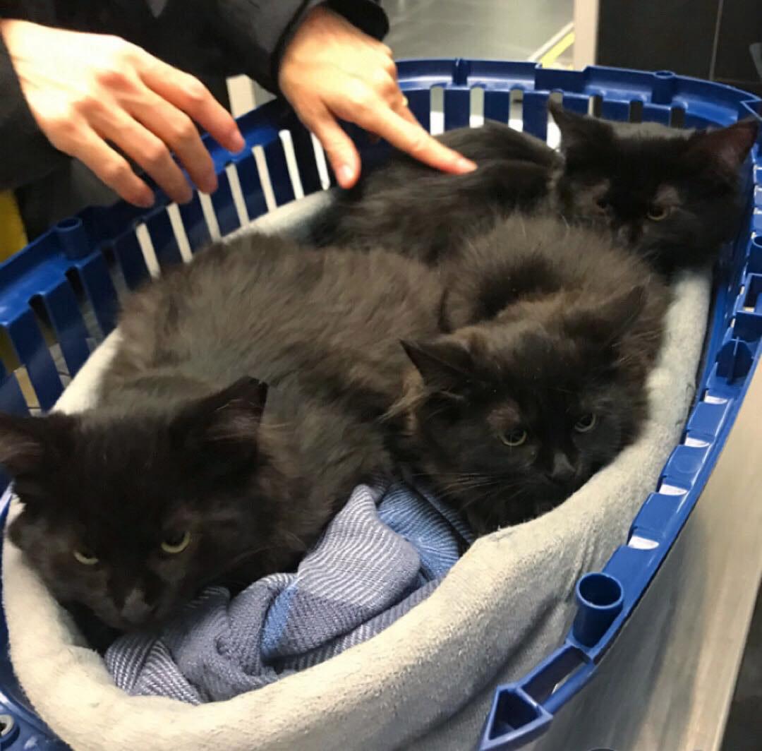 Gata sin hogar presenta gatitos