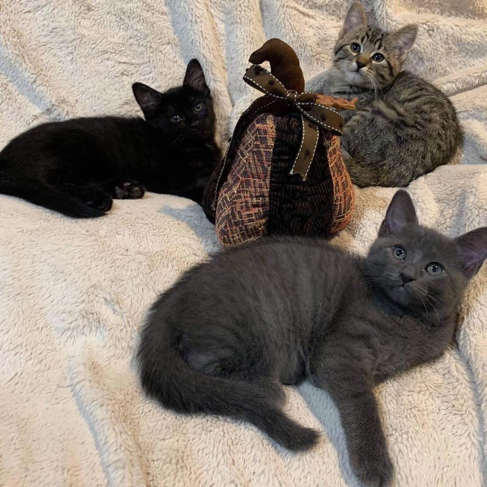 Gata y sus gatitos recién nacidos