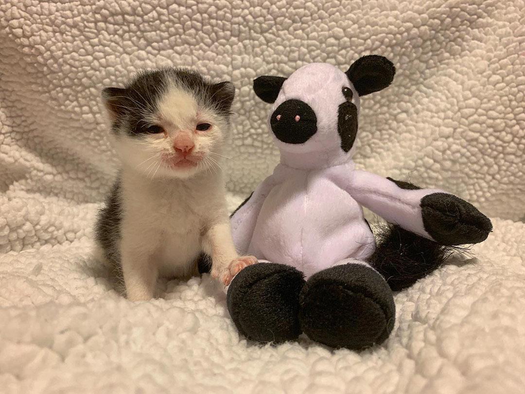 Gatito con peluche
