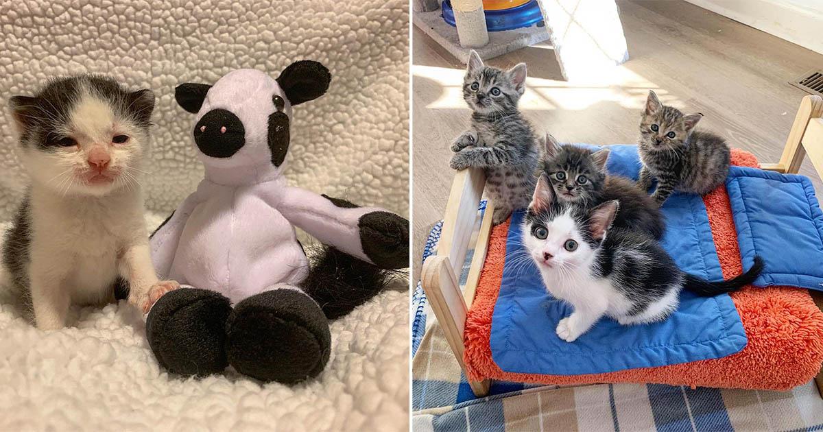 Gatito encontrado solo lleva su vaca de peluche