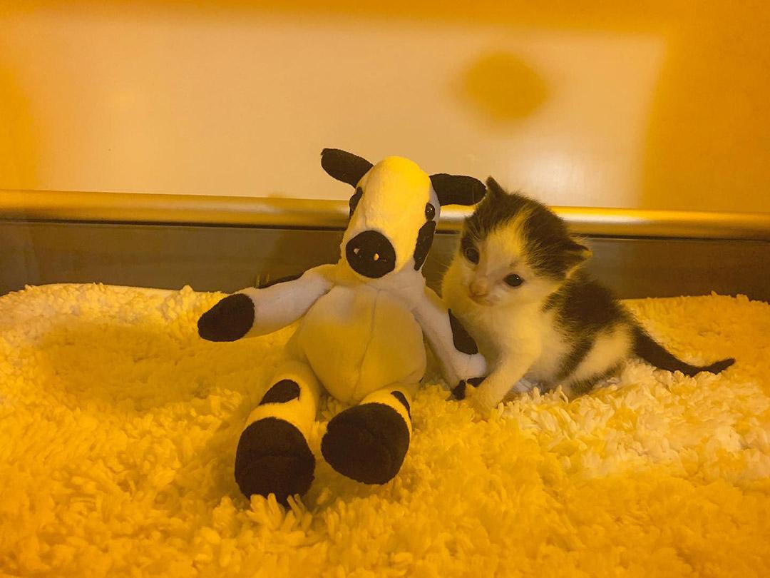 Gatito encontrado solo rescatado