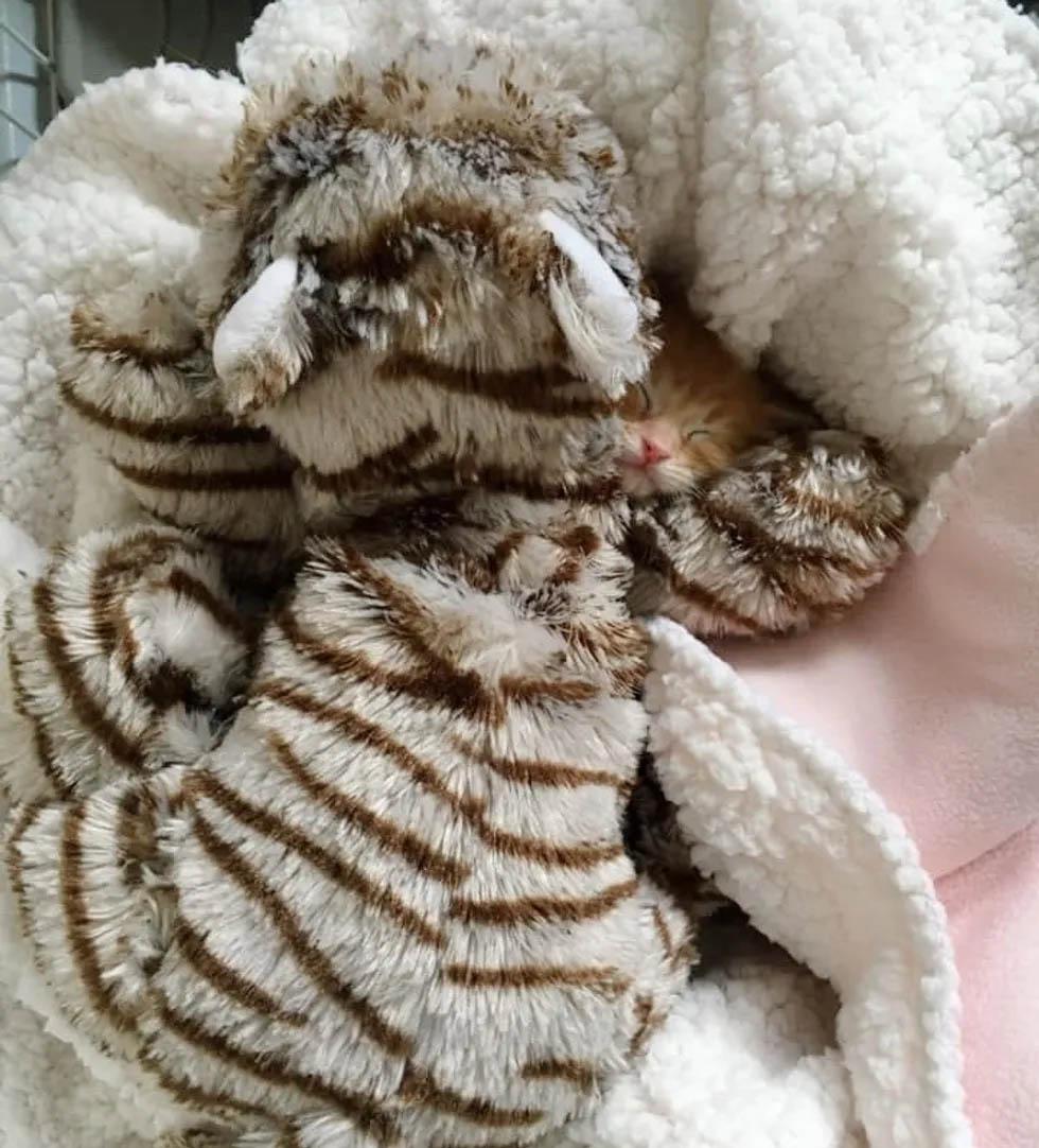 Gatito rescatado maullaba duro