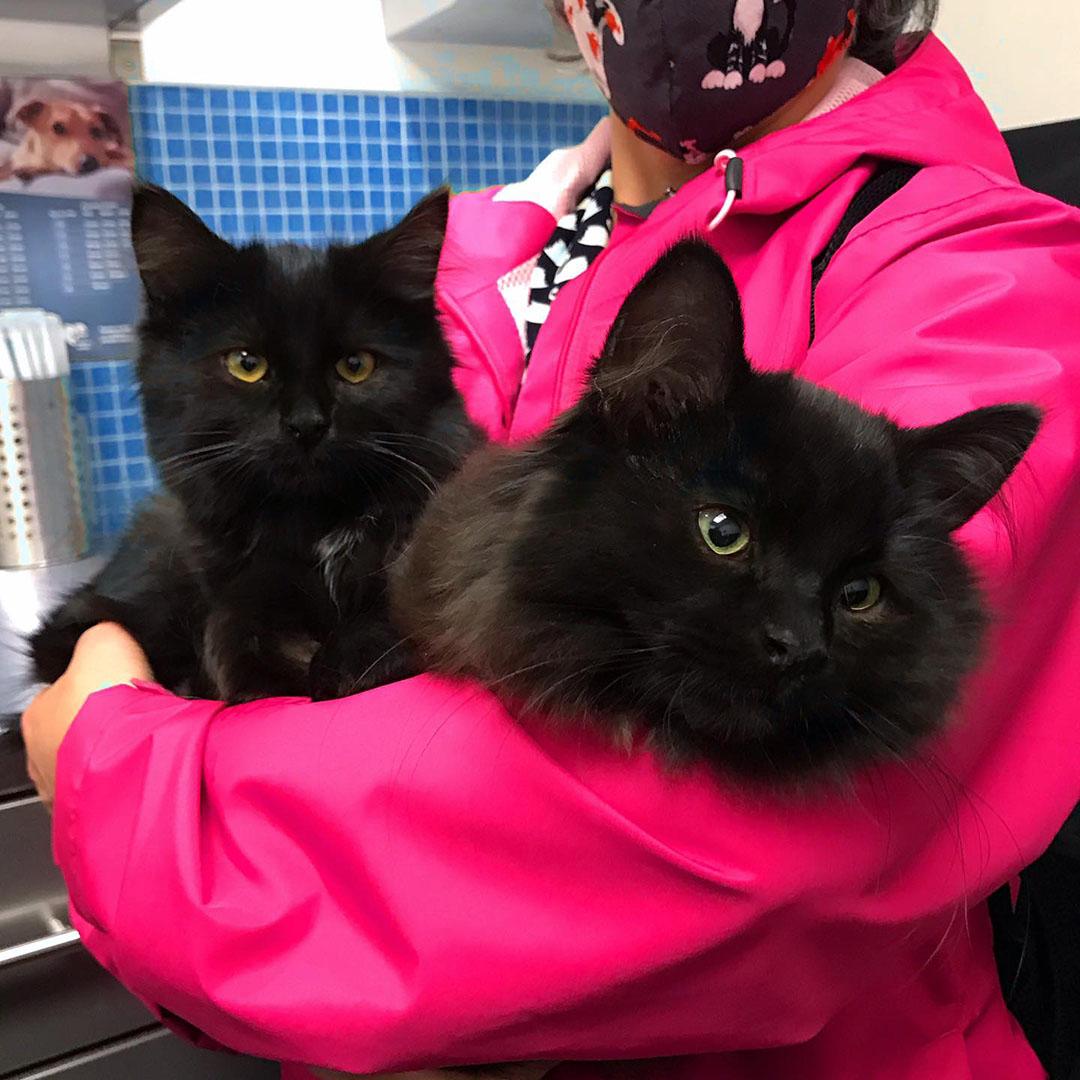 Gatitos con voluntarios