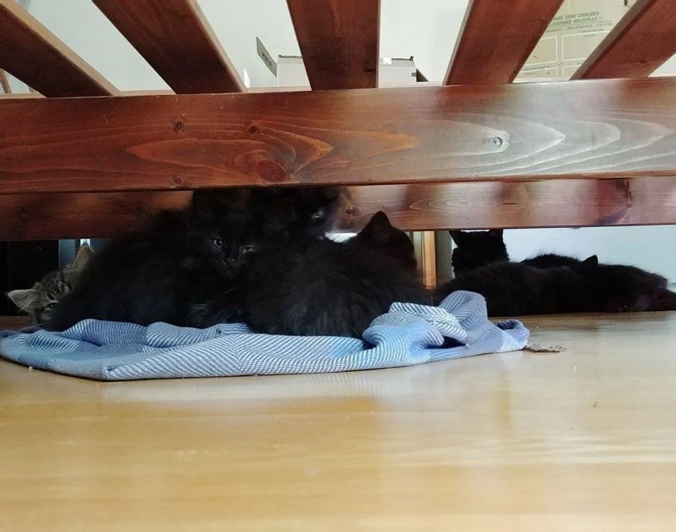 Gatitos entran en casa