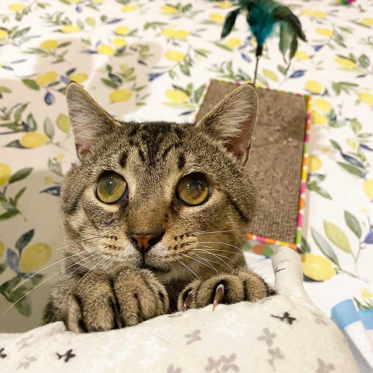 Gato de ojos grandes
