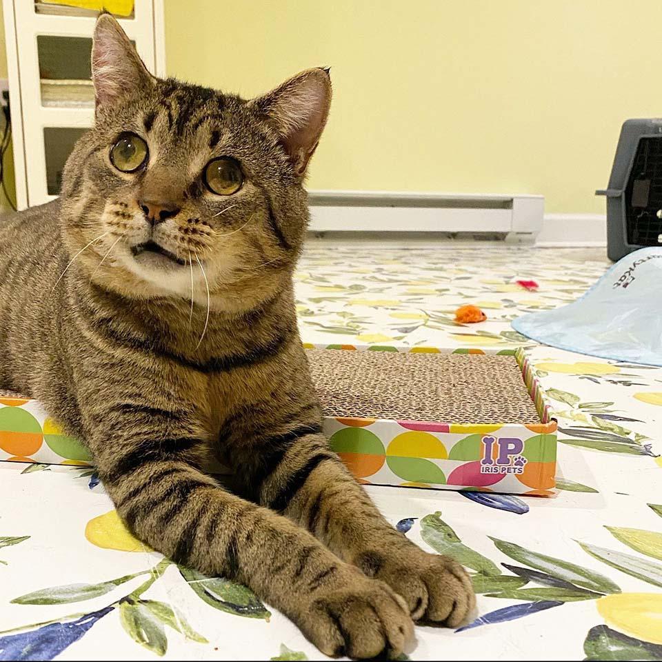 Hermoso gato de ojos grandes