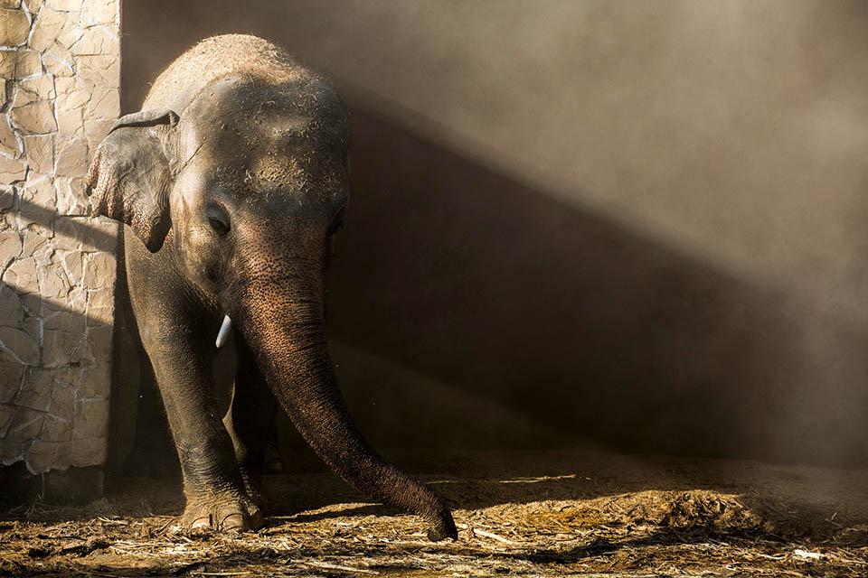 Kaavan elefante más solitario