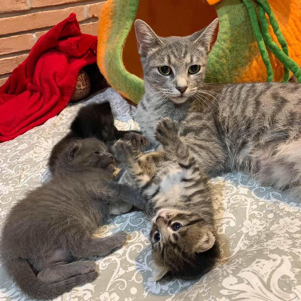 Mamá y sus gatitos recién nacidos
