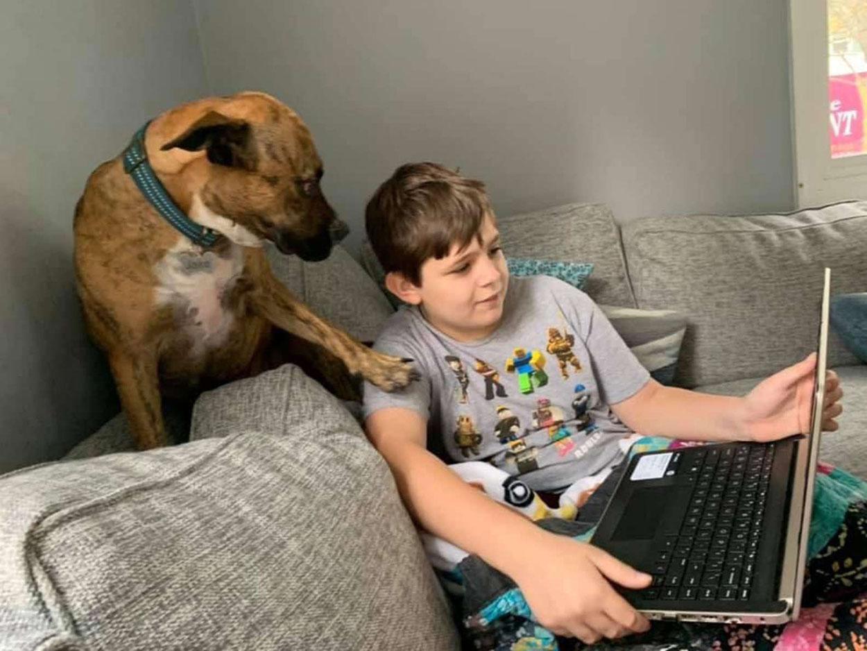 Perro intenta interrumpir a su hermano