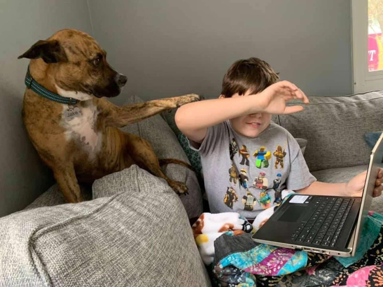 Perro interrumpe las clases de su hermano