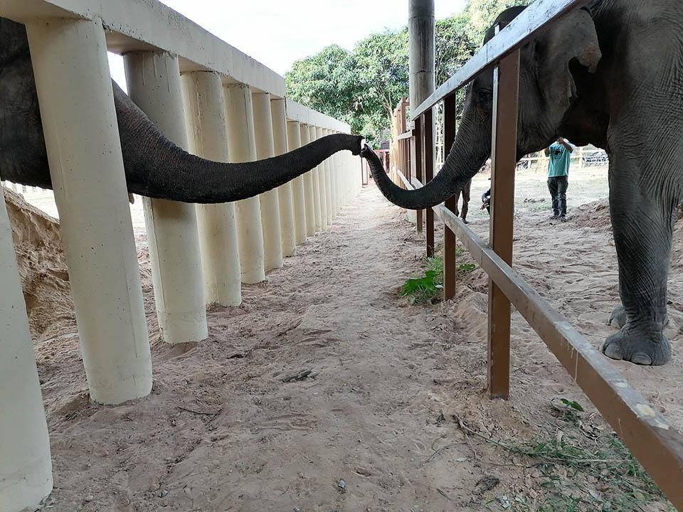 Saludo de elefantes