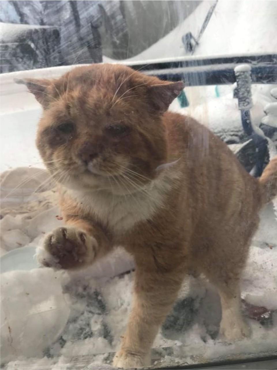 gato llama a puerta en invierno