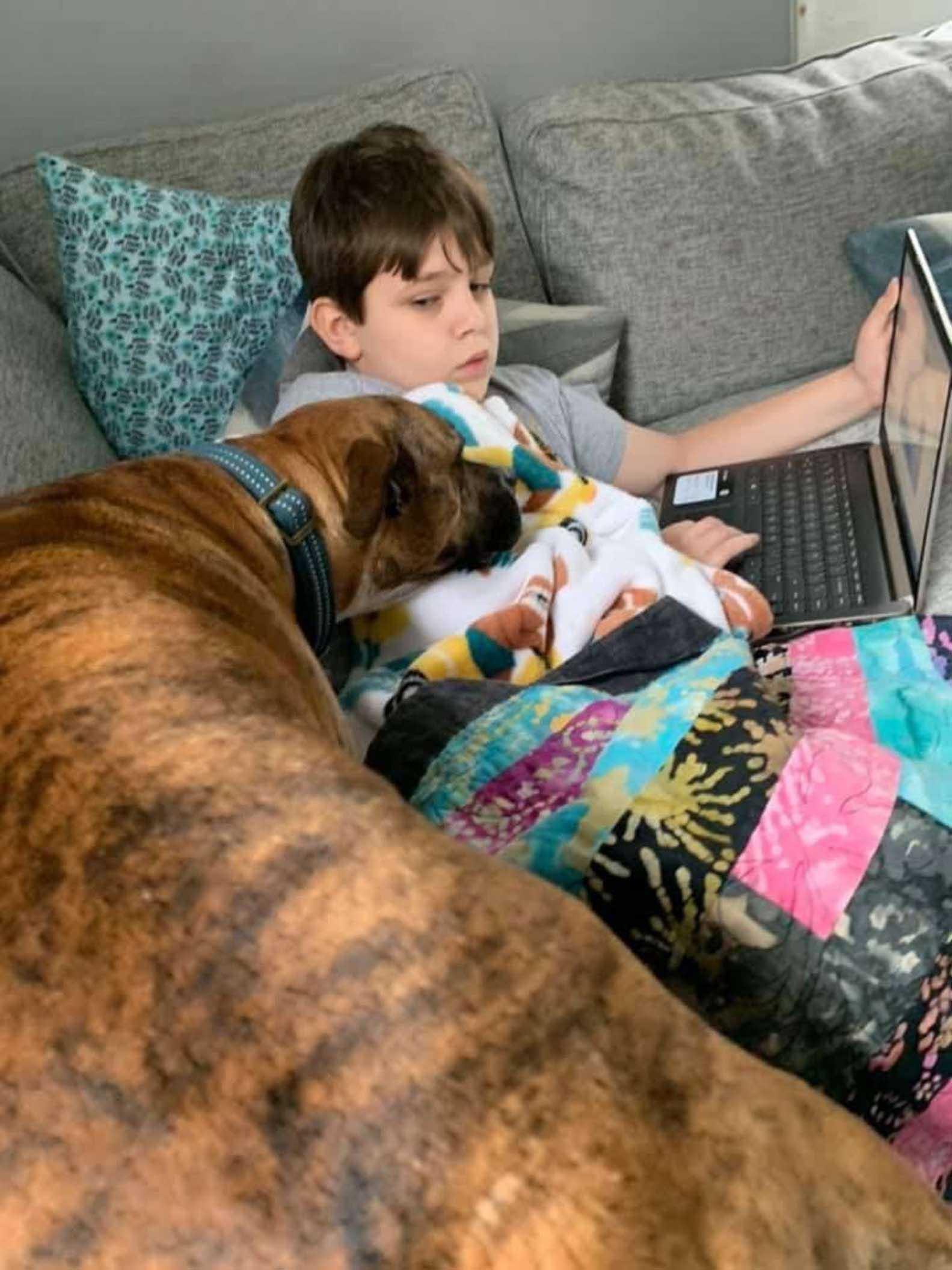 perro no deja ver sus clases a su hermanito