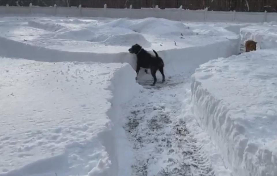 21 perros juegan en laberinto de nieve
