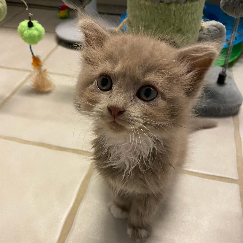 Adorable gato bebé juguetón