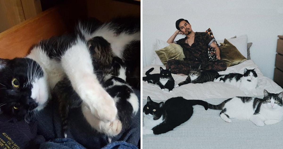 Chico no planeaba tener un gato adopta 5