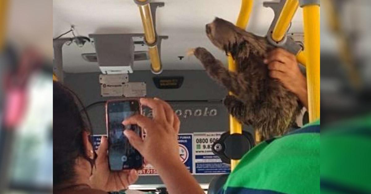 Conductor de autobús se detiene y lleva a perezoso perdido a lugar seguro