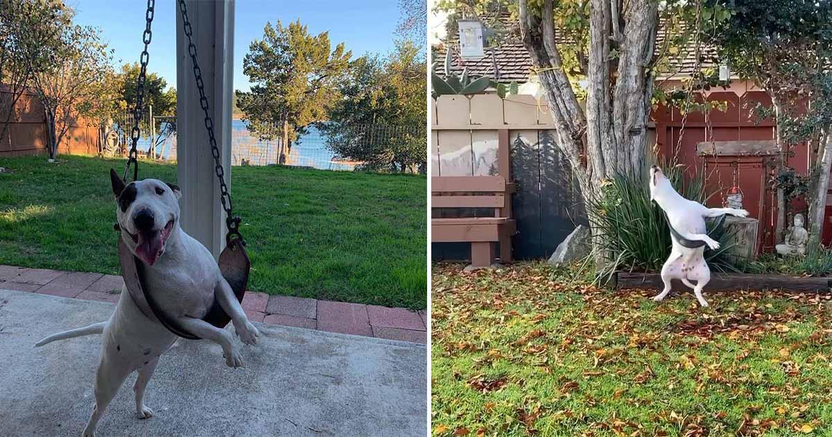 El momento más feliz del día de este perro es jugando en el columpio del patio trasero