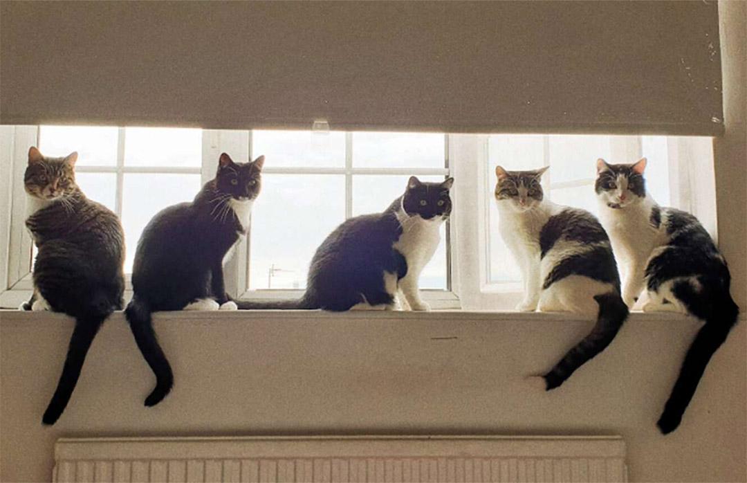Familia de gatos creciendo