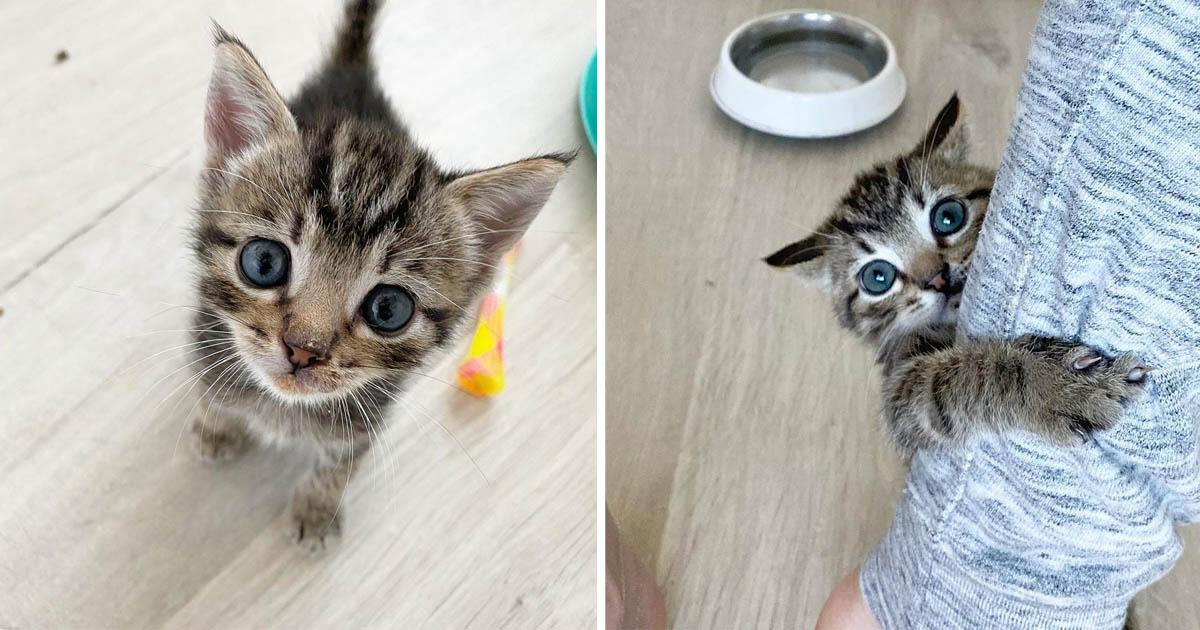 Gatito atigrado quiere ser centro de atencion