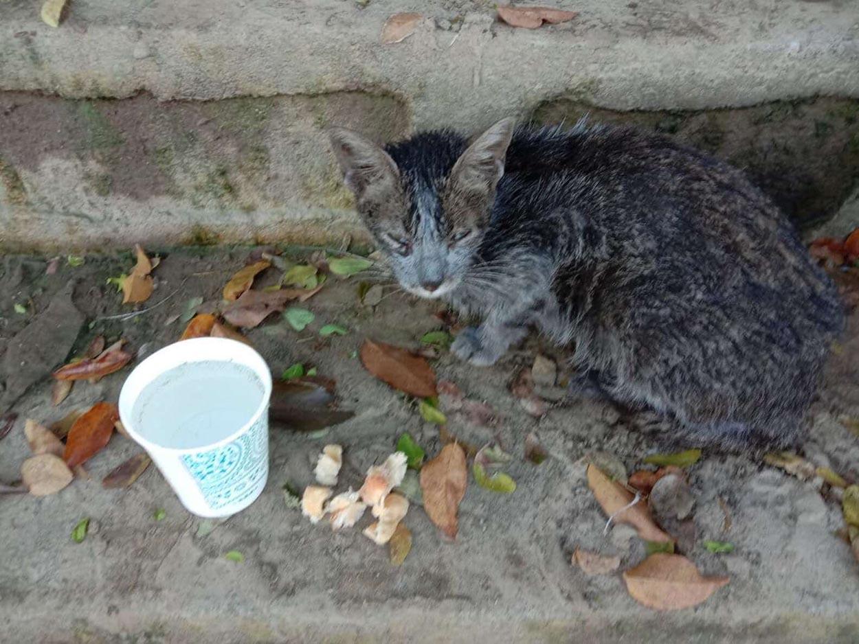 Pequeño gato encontrado