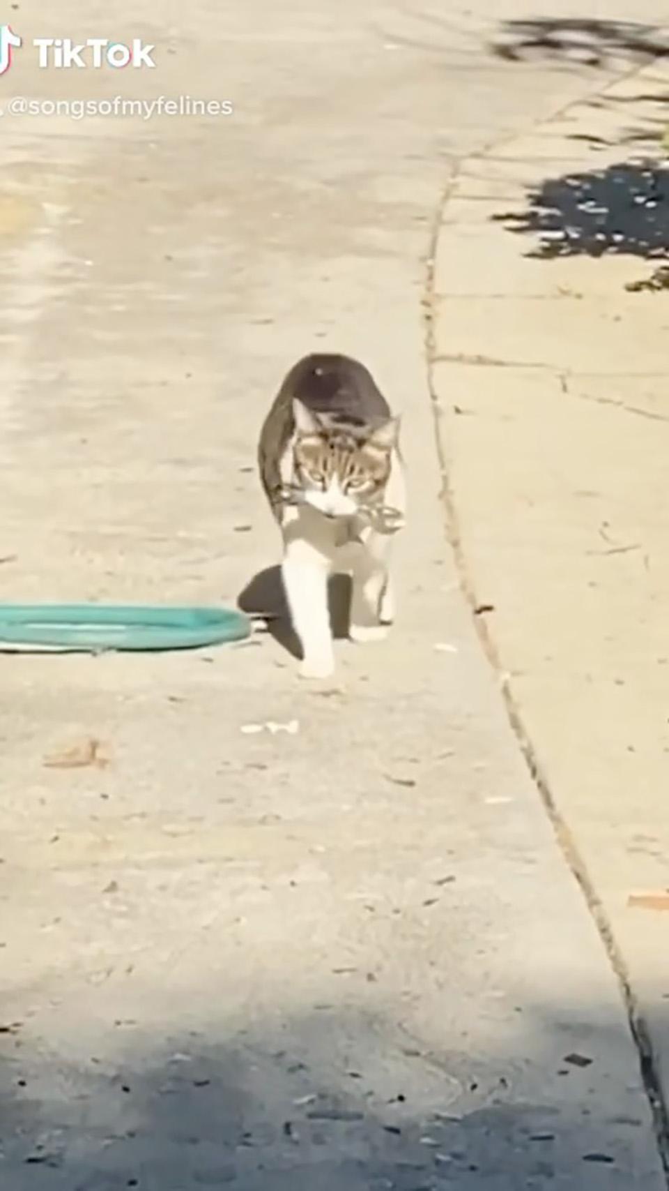 Gatito roba a sus vecinos