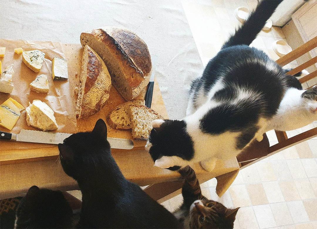 Gatitos comiendo