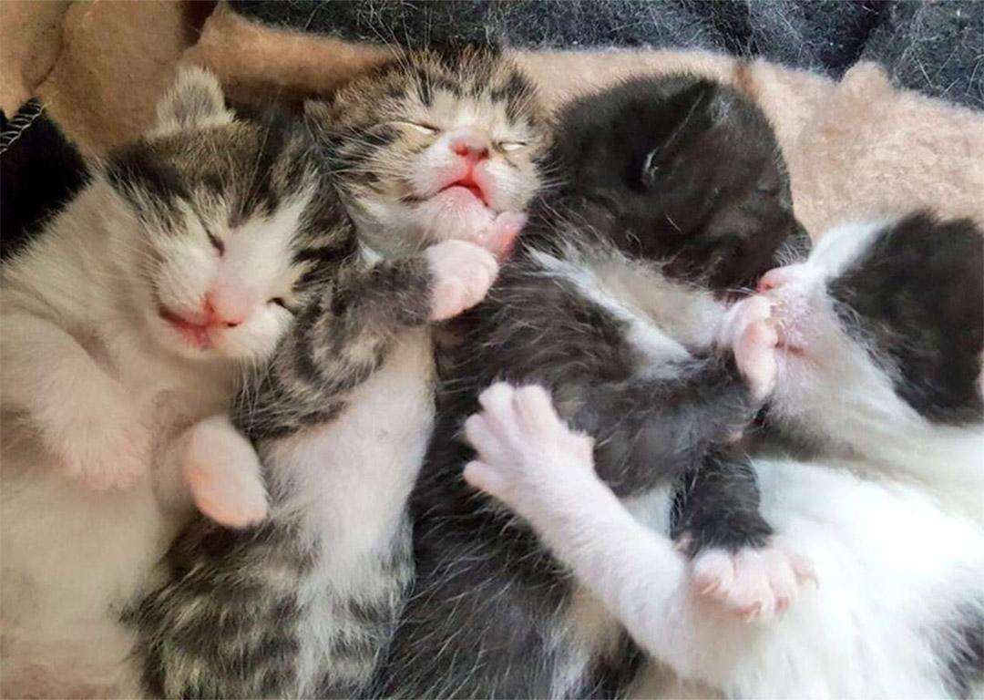 Gatitos debajo de cama