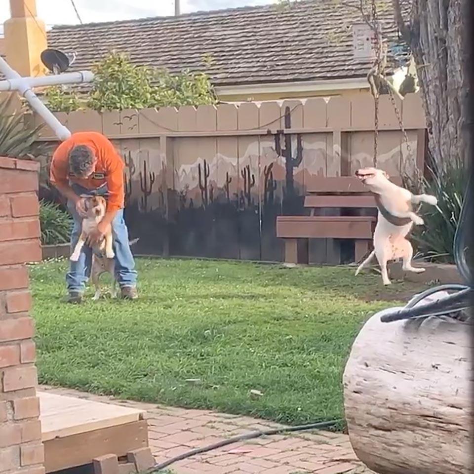 Graciosos perros en el jardín