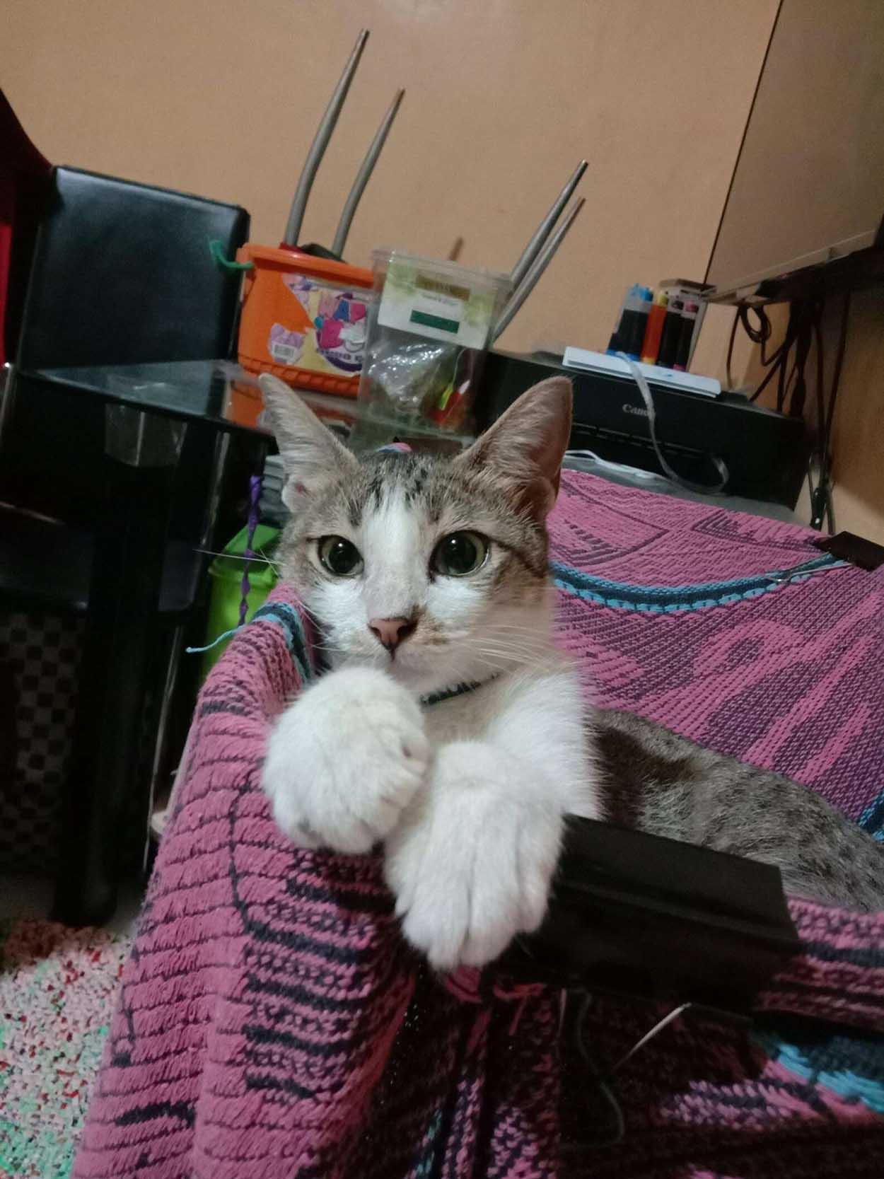 Hermoso gatito sin hogar rescatado