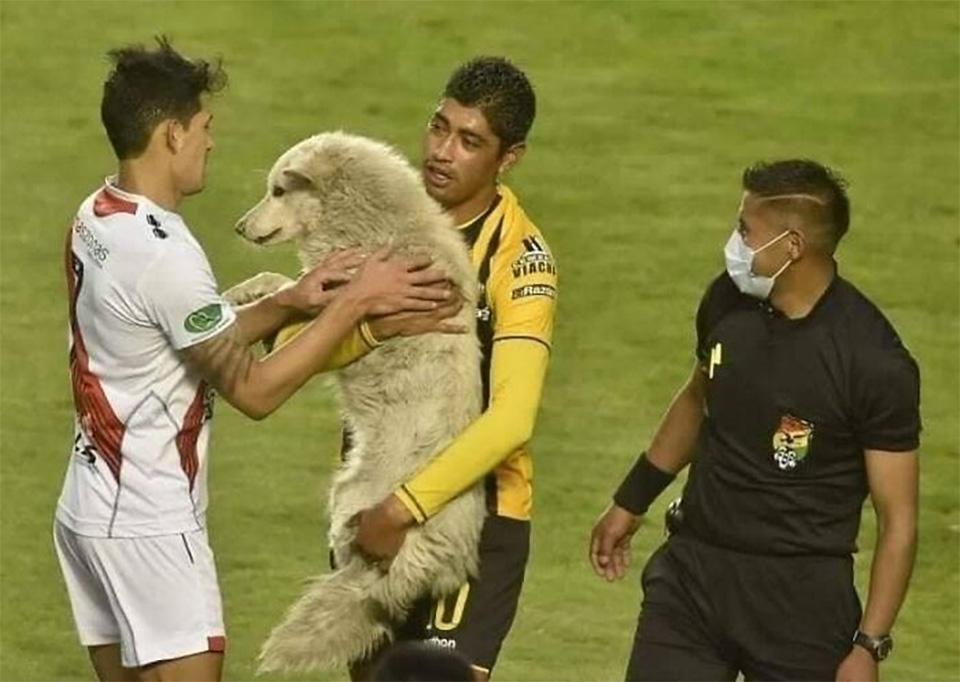 Jugador atrapa perro