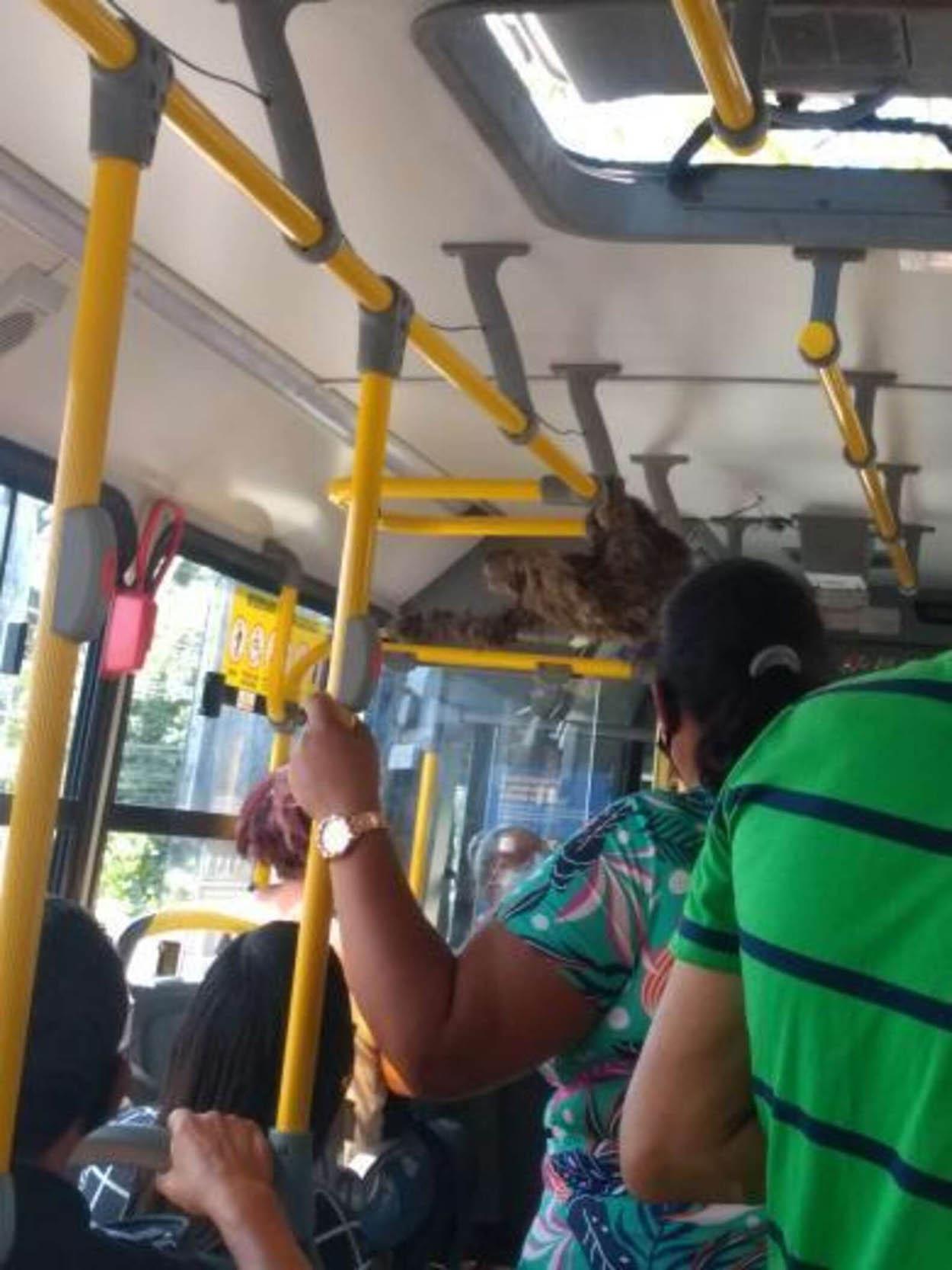 Perezoso en un autobús
