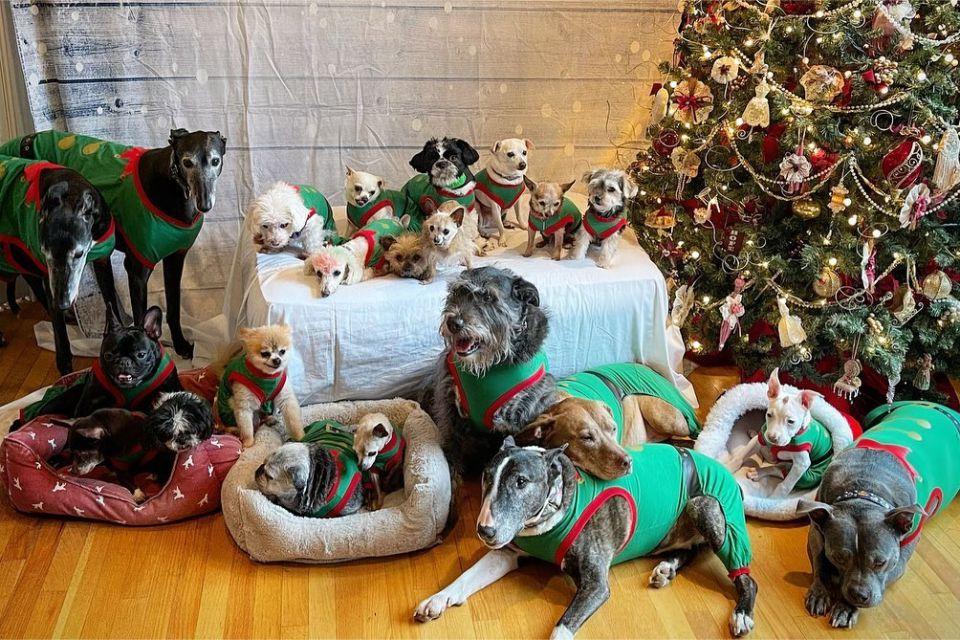 familia 21 perros navidad