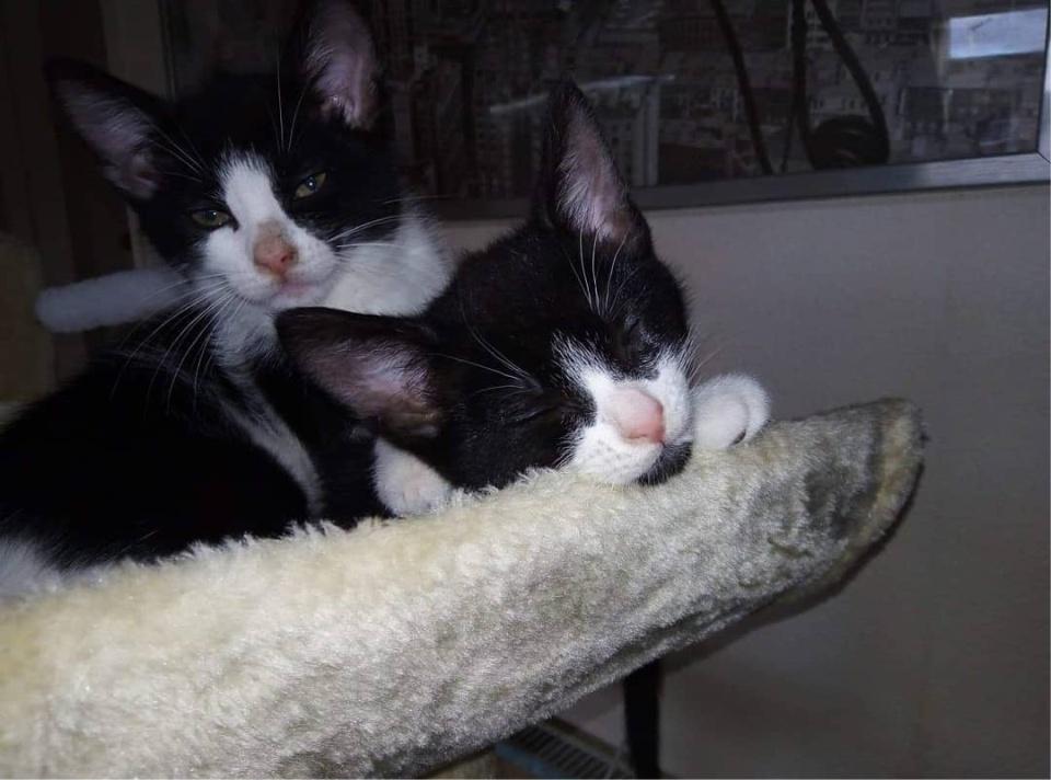 hermanos gatos vagabundos canterbury
