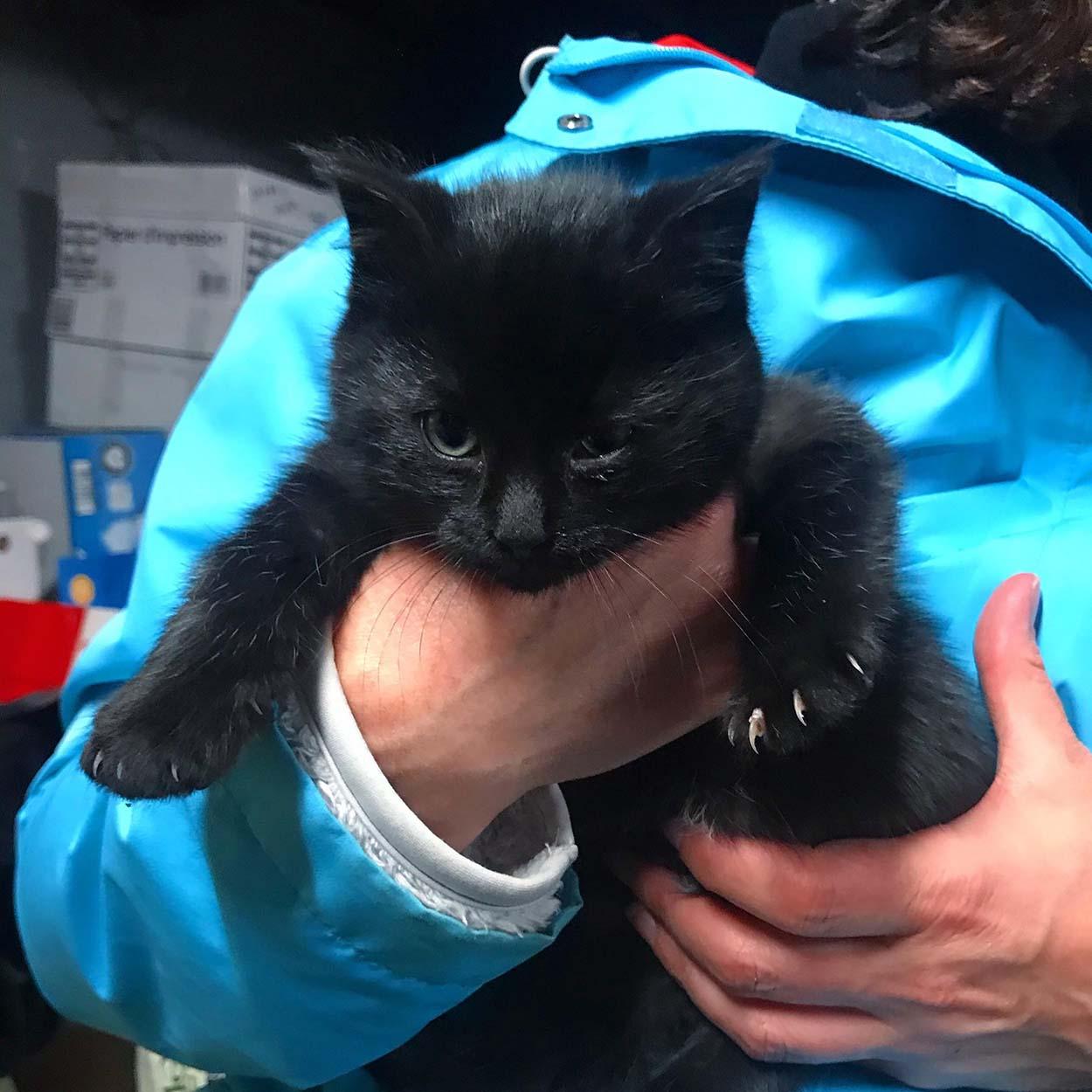 Adorável gatinho resgatado