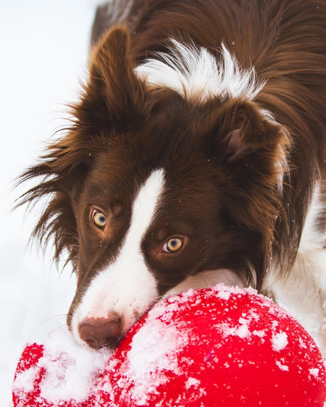 Adorable perro intentando jugar a buscar la pelota