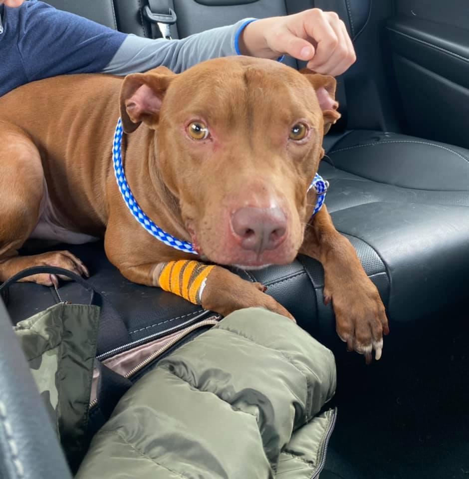 Adorable perro n el auto