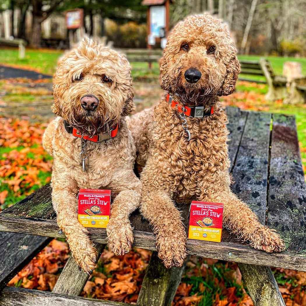 Adorables perros en el parque