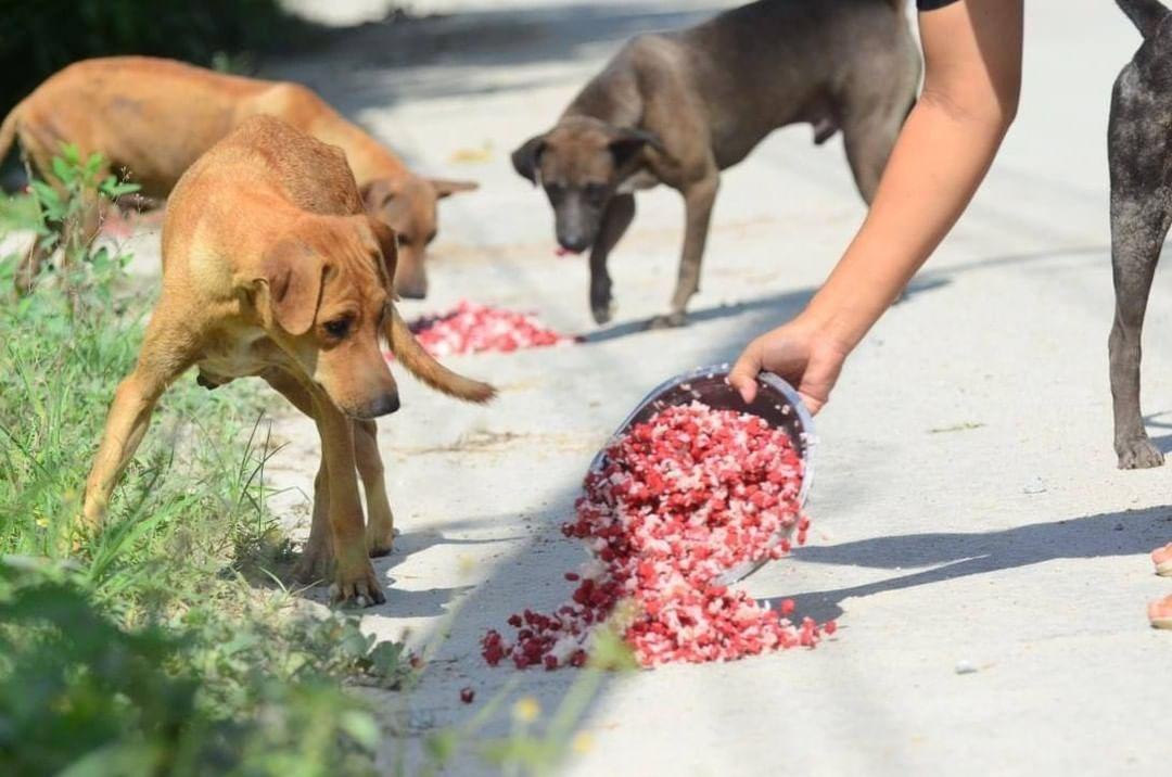 Alimentando perros sin hogar