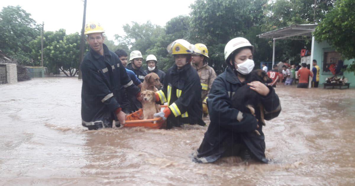 Bomberos en Paraguay rescata animales afectados
