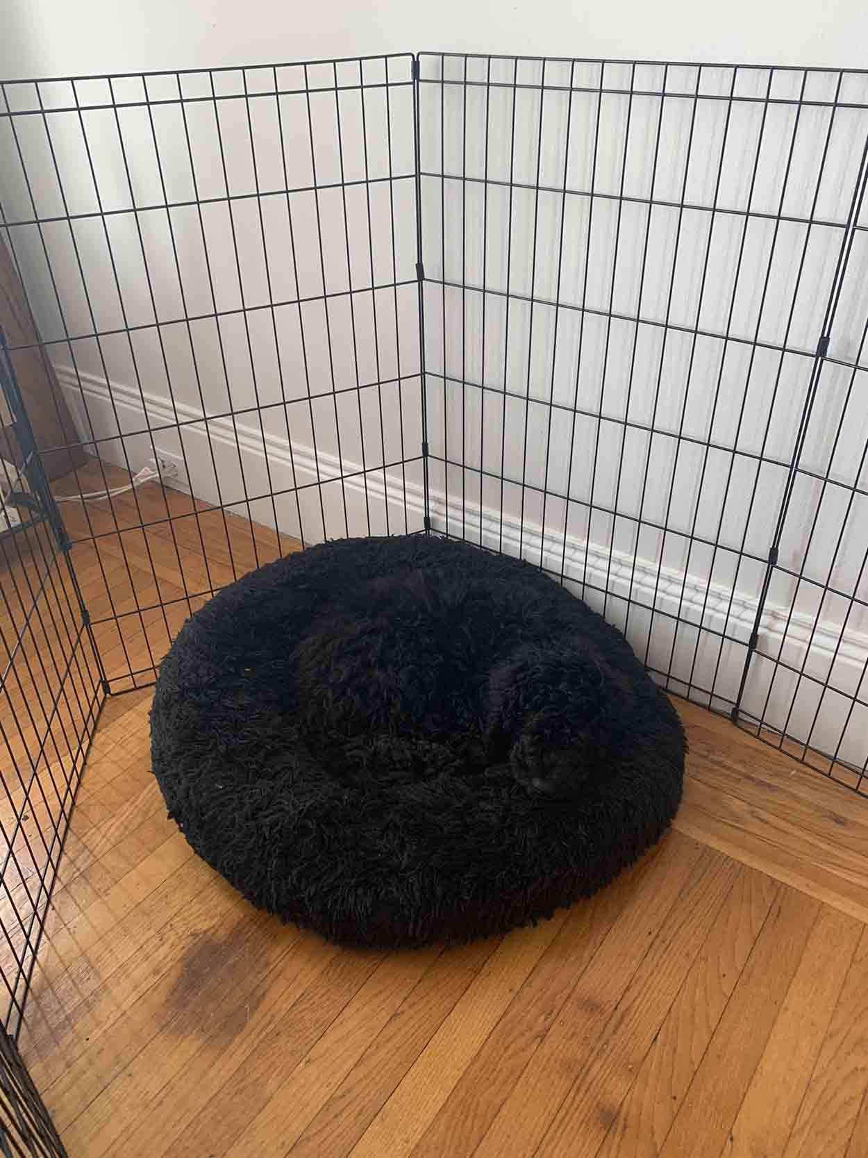 Cachorro se camufla en su cama