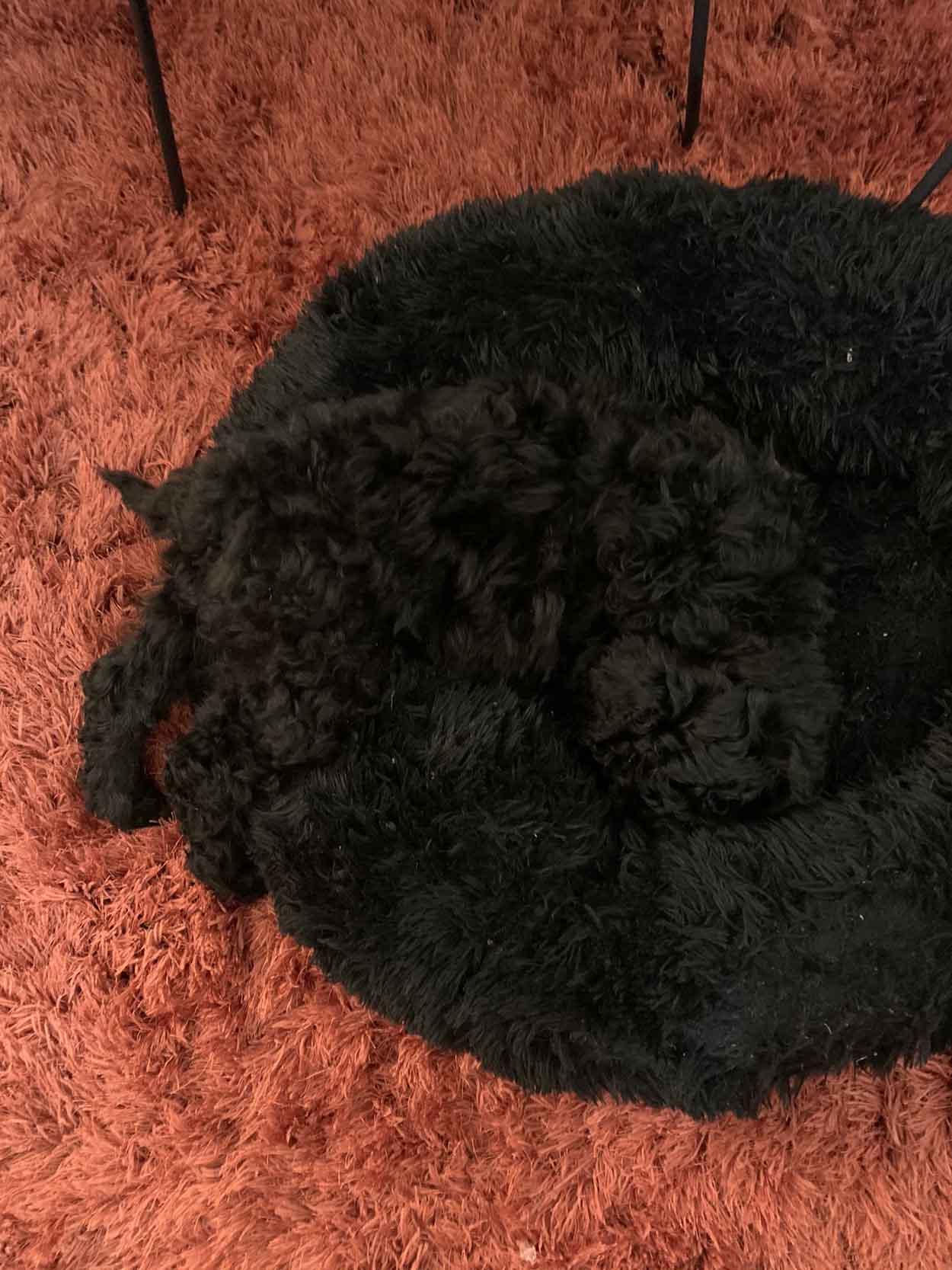 Cachorro se camufla fácilmente en su cama