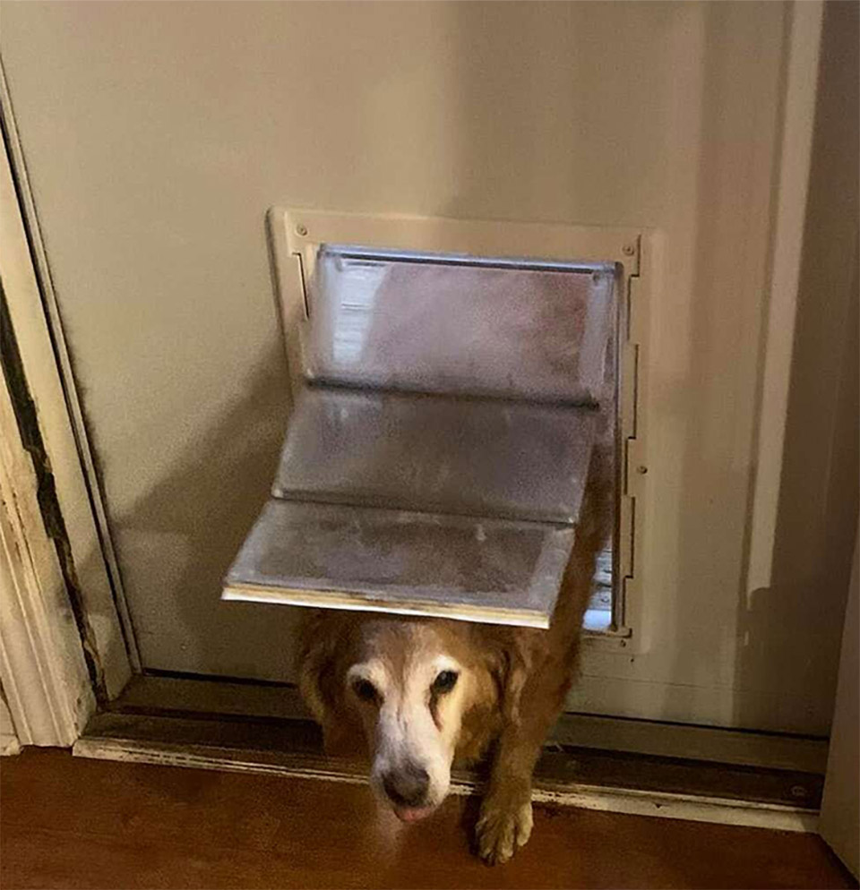 Dakota usando puerta
