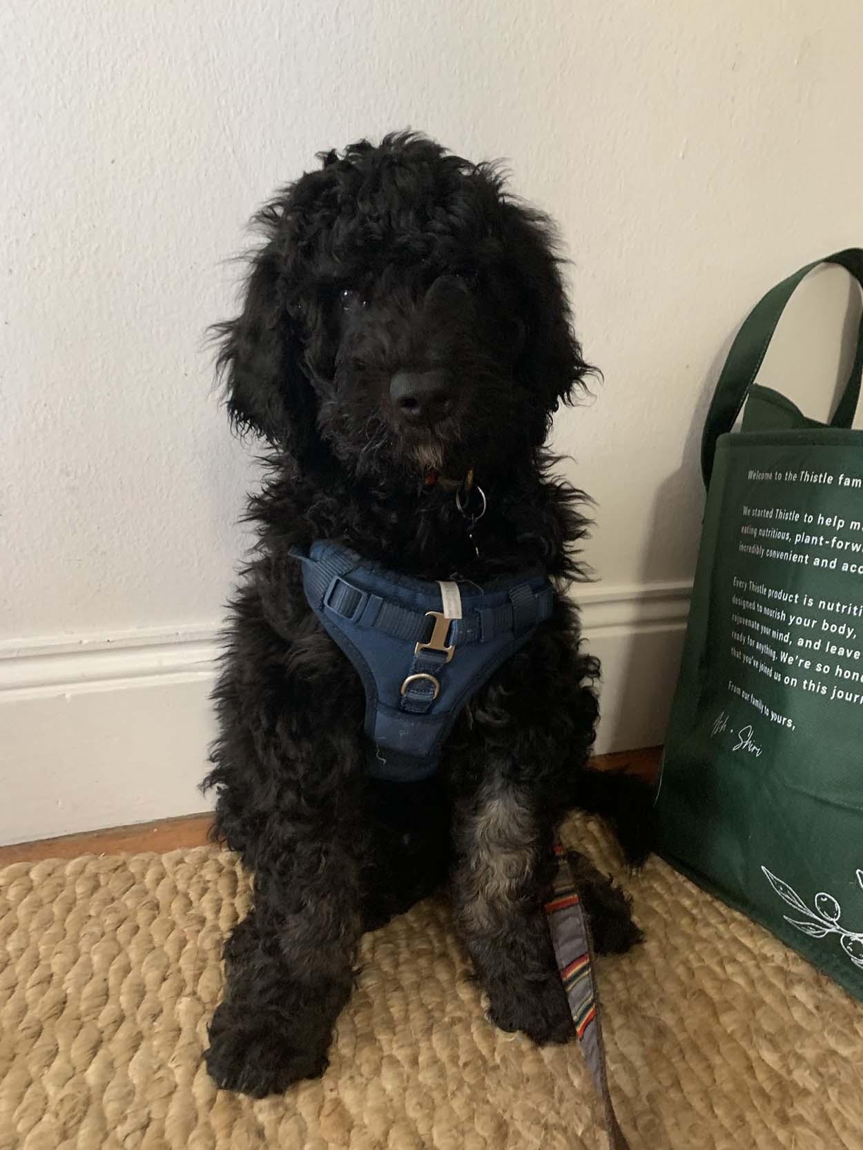 Hermoso cachorro de color negro